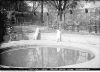 Historic photo from Wednesday, May 26, 1926 - Polar bear cubs, Riverdale Zoo in Riverdale park