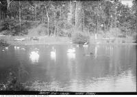 Historic photo from Tuesday, September 24, 1929 - High Park duck and goose pond in High Park