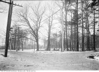 Historic photo from Tuesday, January 27, 1914 - Trees and houses - southeast corner of Christie Street and Braemore Gardens in Davenport
