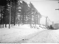 Historic photo from Friday, January 23, 1914 - Trees cut down on Christie Street south to Davenport Road in Davenport