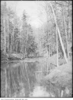 Historic photo from 1908 - Pond in Glen Stewart estate or park in The Beaches
