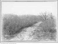 Historic photo from 1908 - Footpath across Don Valley where the viaduct is now in Rosedale