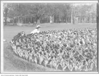 Historic photo from 1912 - Two girls with bows in their hair enjoying the tulips at Queens Park in Queens Park