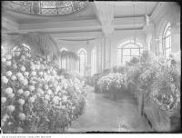 Historic photo from 1915 - Palm Room or Conservatory, Casa Loma in Casa Loma
