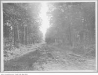 Historic photo from 1911 - Muddy street in Moore Park with lots of trees in Moore Park