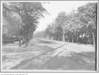 Historic photo from 1909 - Lots of trees on Bloor Street West, looking east from St. George Street in University of Toronto (U of T)