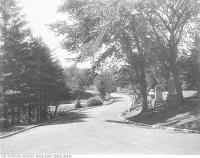 Historic photo from 1910 - Winding road and trees in Mount Pleasant Cemetery in Mount Pleasant Cemetery