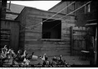 Historic photo from Wednesday, September 19, 1934 - Geese at the rear of 184-1/2 Baldwin Street in Kensington Market