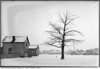 Historic photo from 1933 - Lone tree, dog, and house TTC Property - St. Clair and Runnymede Road District in Runnymede