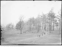 Historic photo from Friday, February 14, 1913 - Kids playing in Dufferin Grove park - north from Gladstone Avenue in Dufferin Grove