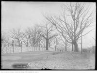 Historic photo from Friday, February 14, 1913 - Spadina Road Park - south from Austin Terrace in Casa Loma