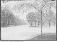 Historic photo from Wednesday, May 20, 1914 - Trees out front of the University Avenue Armouries in Royal Ontario Museum