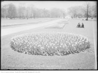 Historic photo from Saturday, May 8, 1915 - Tulip beds at Queens Park in Queens Park