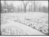 Historic photo from Saturday, May 8, 1915 - High Park - Tulip Beds in High Park