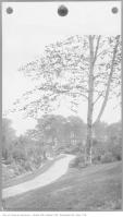 Historic photo from Saturday, September 1, 1917 - Path and trees in Dufferin Grove Park in Dufferin Grove