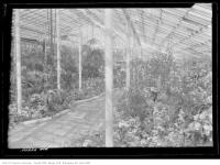 Historic photo from Wednesday, March 16, 1921 - Path and flowers in an Allen Gardens greenhouse in Garden District
