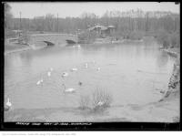 Historic photo from Friday, May 12, 1922 - Riverdale Zoo Park - waterfowl in the lower pond in Riverdale park