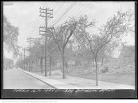 Historic photo from Monday, May 21, 1934 - State of the trees in Dufferin Grove - May in Dufferin Grove