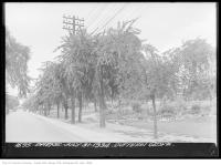 Historic photo from Tuesday, July 31, 1934 - State of the trees in Dufferin Grove - July 31st in Dufferin Grove