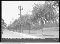 Historic photo from Tuesday, July 31, 1934 - State of the row of trees in Dufferin Grove - July in Dufferin Grove